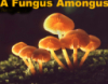helen99: There's a fungus amongus (There's a fungus amongus)
