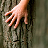 rootedstone: hand spread against tree bark (touch wood)