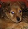 rawnee: (Kizzie pup)