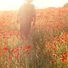 ceitfianna: (poppies)