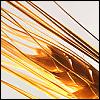 wheatencrown: (close up wheat)