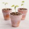 wheatencrown: (seedling icon)
