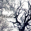 will_scarlett: (Winter forest)