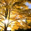 will_scarlett: (fall forest)