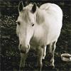nilzita: Horse (Horse) (Default)