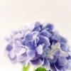 nilzita: Flowers. (Flowers)