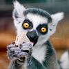 technosage: (misc_lemur MINE)