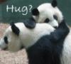 iris_aya: (Panda hug)