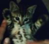 glamtasm: (Fierce Kitty)