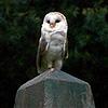 malinaldarose: (owl)