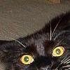 aj_crawley: (CAT, [cat] DO NOT WANT)