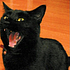 aj_crawley: ([cat] AAAAAAAAAAAAAAA)