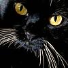 aj_crawley: ([cat] no.)