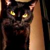 aj_crawley: ([cat] >:[)