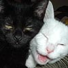ostro_goth: (x Cat with Yrael)
