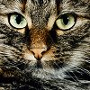 ostro_goth: (z Cats - Kitty)