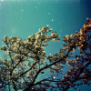 theokleia: tree branches reaching up towards a cyan sky littered with gold stars (tree sky turquoise)