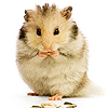 taxcollectors: (hamster} first)