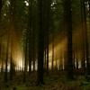 minstrel: (forest)