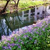 paraka: A building reflected in a stream with flowers on the bank. (NF-Flowers and Stream)