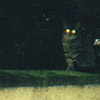 owl: Murphy on a walk; eyes headlamping in the flash (muffin2)