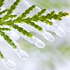 justdidntseeit: (o christmas tree)