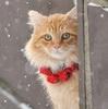 la_gatta_ciara: (кот)