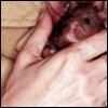 2020sight: (Animal magnetism (rat))