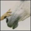 2020sight: (Animal magnetism (horse))