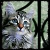 raimetyaro: (котыыы)