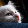 ariyana_creations: (06 || Kitty)