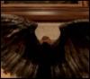 avirtueofangels: (wing flash)