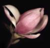 epershina: (цветок)