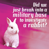 songfire: (sherlock investigating rabbit)