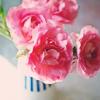 lemonadeandgin: (carnations)