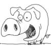 cinereus: (Pig)