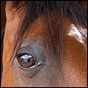 greenie_breizh: (horse)