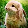 aconitedoll: (bunny)