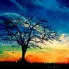 cambrian: (pretty tree)