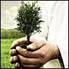 pollyn: (дерево)
