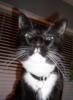 debboamerik: black-and-white cat (Default)