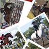 equestrian: (Default)
