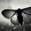 vita: (Moth on window - BW)