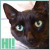 ephemera: small black cat says hi (Ariel says hi!)