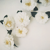 distractions: some pretty flowers (white flowers)