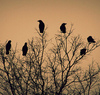 nest_of_magpies: (magpie tree)