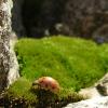 evilhippo: ladybug (ladybug)