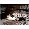 squiggy1108: (cats)