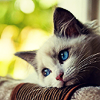 outstretched: (STOCK ♥ [cats] Of the deepest blue)