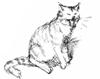 ext_48751: (togari cat)